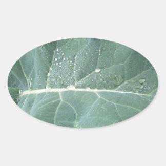 Raindrops on cauliflower leaves oval sticker