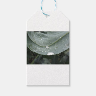 Raindrops on cauliflower leaves pack of gift tags
