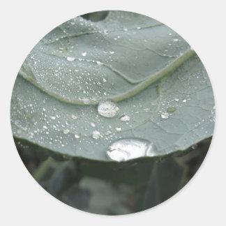 Raindrops on cauliflower leaves round sticker