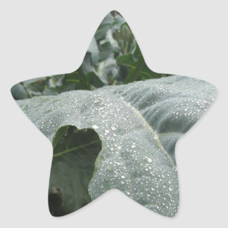 Raindrops on cauliflower leaves star sticker