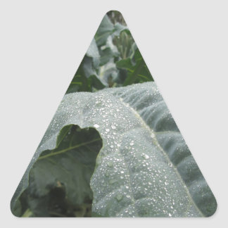 Raindrops on cauliflower leaves triangle sticker