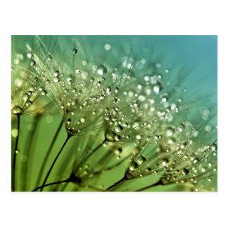 Raindrops on dandelions postcard