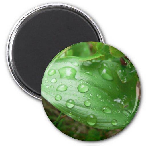 Raindrops On Green Leaf Fridge Magnets