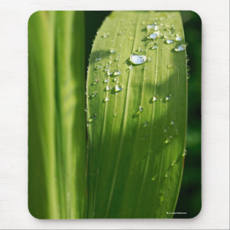 Raindrops on green leaf mouse pad