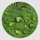 Raindrops on Green Leaf Stickers