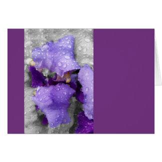raindrops on iris card