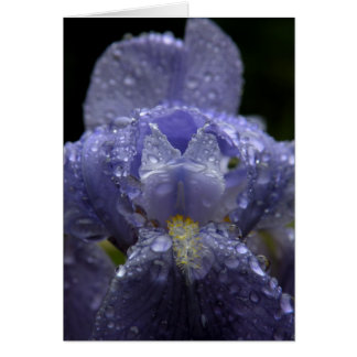 Raindrops on Iris - Greeting Card