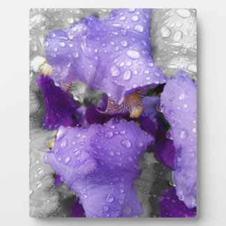 raindrops on iris plaque