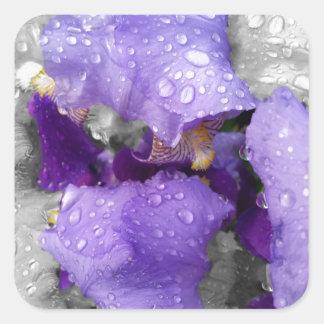 raindrops on iris square sticker