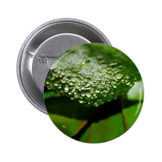 RAINDROPS ON LEAF QUEENSLAND AUSTRALIA 2 INCH ROUND BUTTON