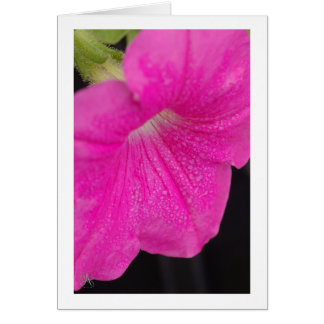 Raindrops on Petunias Card