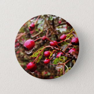 Raindrops On Rosehips 2 Inch Round Button