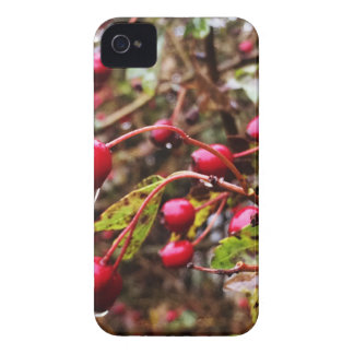 Raindrops On Rosehips iPhone 4 Case-Mate Case