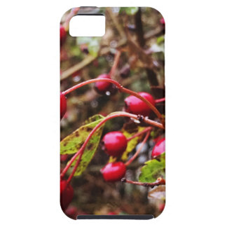 Raindrops On Rosehips iPhone 5 Case