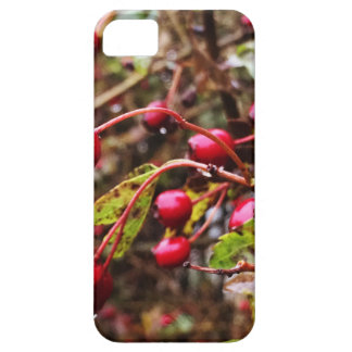 Raindrops On Rosehips iPhone 5 Covers