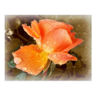 Raindrops on Roses..... Postcard