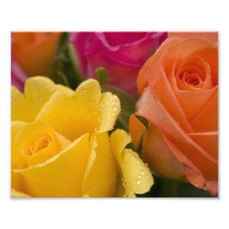 Raindrops on Yellow Orange and Pink Roses Photo Print