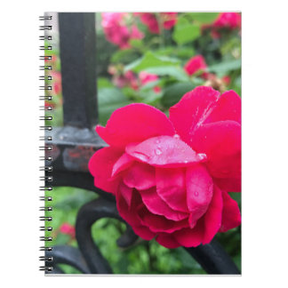 Raindrops Pink Rose Flower Roses Rainy Day NYC Notebook