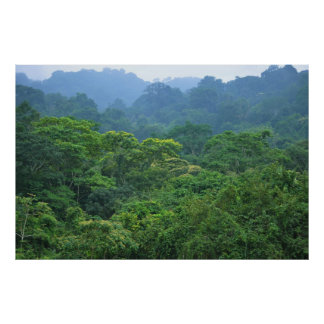Rainforest canopy panorama poster