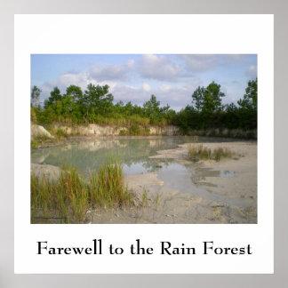 Rainforest Conservation  poster