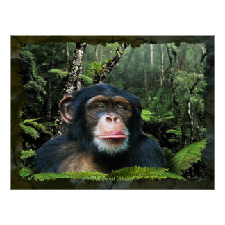 """RAINFOREST DREAMS II"" Chimpanzee Art Poster"
