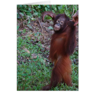 Rainforest Hikes Card