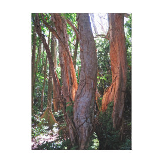 Rainforest Light Canvas Print