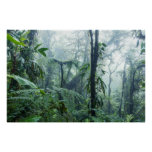 Rainforest, Monteverde Cloud Forest, Costa Rica Poster