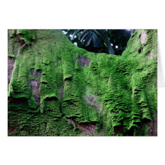 Rainforest Moss Card