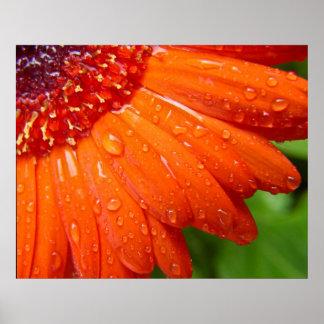 Rainy Daisy Poster