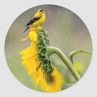 Rainy Day Goldfinch Classic Round Sticker