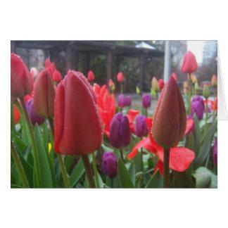 Rainy Day Tulips Card