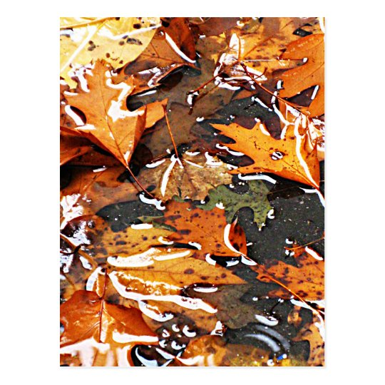 Rainy Fall Leaves Postcard