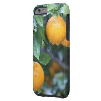 Rainy Oranges 2 Tough iPhone 6 Case