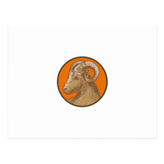 Ram Goat Head Circle Drawing Postcard