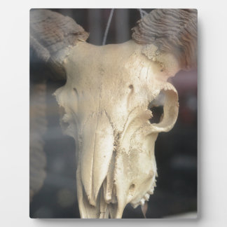 ram skull cool plaque