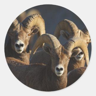 rams classic round sticker