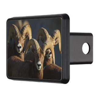 rams trailer hitch cover