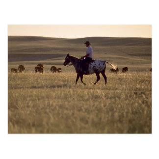 Rancher Buck Holmes riding a horse looking Postcard