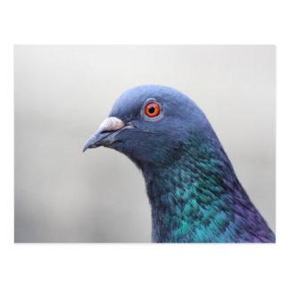 Random Pigeon Postcard