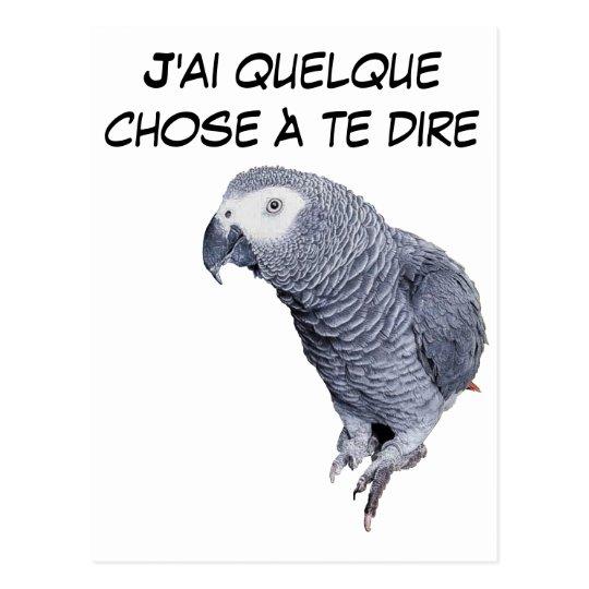 Range Parrot - Gray of Gabon Postcard