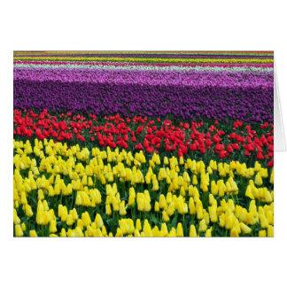 Rangées colorées des tulipes de ressort cartes de vœux