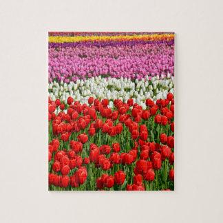 Rangées colorées des tulipes de ressort puzzle avec photo