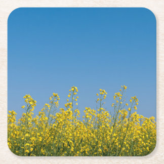 Rape field square paper coaster