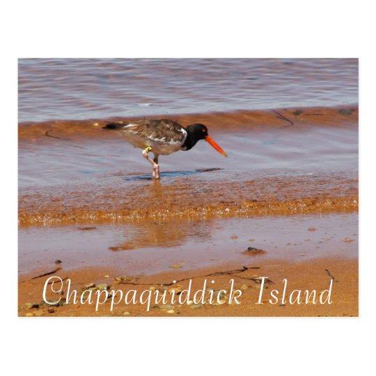 Rare Bird on Chappaquiddick Island Postcard