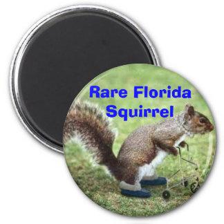 Rare Florida Squirrel Magnet