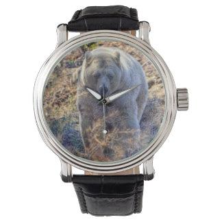 Rare Kermode Bear (Spirit Bear) Wildlife Photo Watch