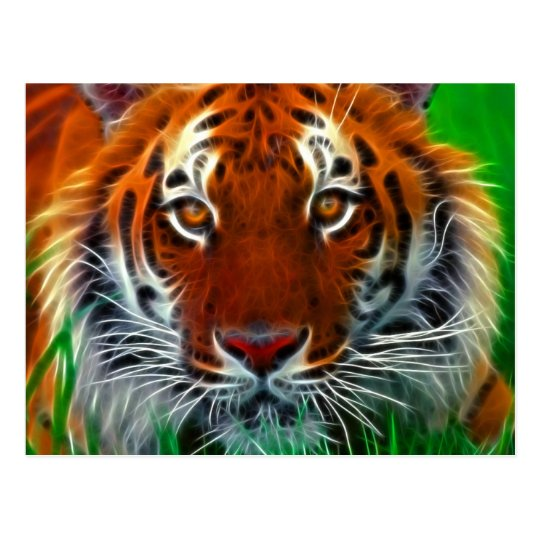 Rare Sumatran Tiger from Indonesia Postcard