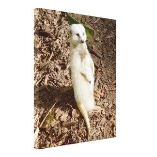 Rare White Fur Standing Meerkat, Canvas Print