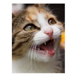 Rascal face cat postcard